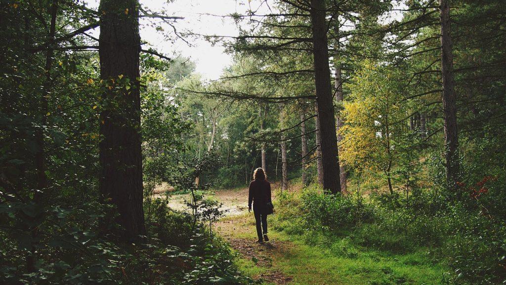man, walking, trip-1225488.jpg